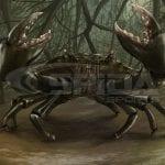 Mud-Crab-Fishing-Shirt-design
